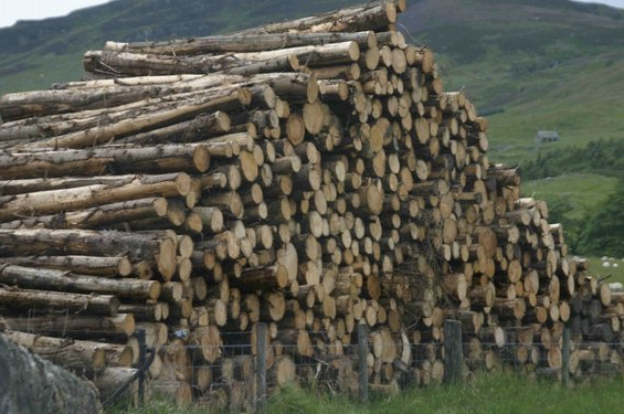 Good Time for Timber and Forestry Investment as Long-Term Outlook Remains Strong