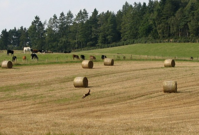 British Farmland's Continuous Appreciation Might Be Coming to a Stall