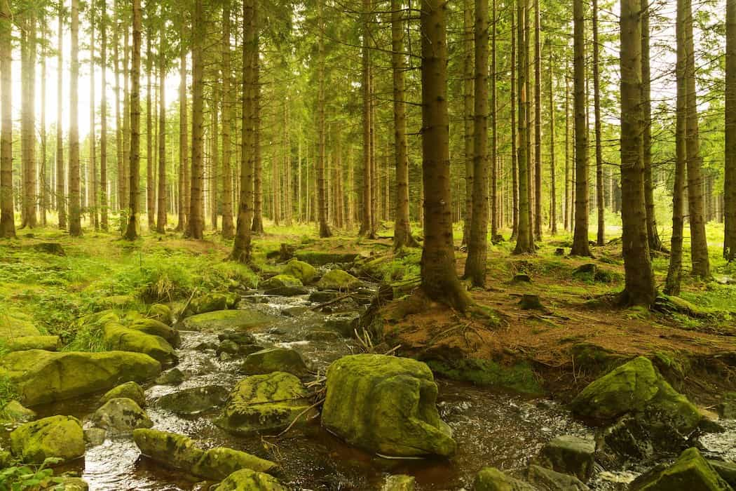 Forestry Investments – Options Available to the Private Investor